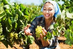 Kobieta pracuje na wytwórnia win jardzie Zdjęcie Stock