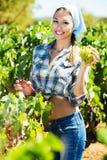 Kobieta pracuje na wytwórnia win jardzie Zdjęcie Royalty Free
