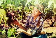 Kobieta pracuje na wytwórnia win jardzie Obraz Royalty Free