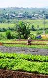 Kobieta pracuje przy jarzynową plantacją w Saigon, południowy Wietnam obraz royalty free