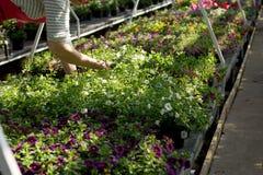 Kobieta pracuje przy kwiatu rynkiem, bierze opiekę rośliny, wręcza h zdjęcia royalty free