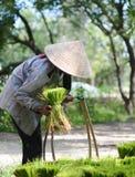 Kobieta pracuje przy plantacją w Mekong delcie, Wietnam zdjęcia stock