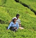Kobieta pracuje w herbacianej plantaci Zdjęcia Stock