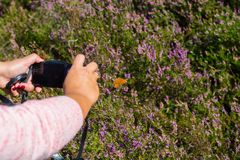 Kobieta robi foto obrazkowi motyl w kwitnąć kolorowy go Zdjęcie Stock