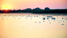 Kobieta robi fotografii pelikany, czaple, seagulls zdjęcie wideo