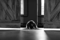Kobieta Robi joga Ćwiczy W Gym, sport sprawności fizycznej dziewczyny Stażowy rozciąganie obraz royalty free