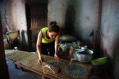 Kobieta robi podpasanie tortowi .BA RIA, WIETNAM LUTY 2 (banh trang) obrazy royalty free