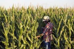 Kobieta rolnik, agronom zawodem, jest w polu z cor Obrazy Stock
