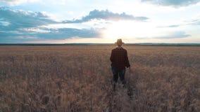 Kobieta rolnik jest na polu i monitoruje pszenicznej uprawy odosobniony tylni widok biel zwolnionego tempa wideo zbiory wideo