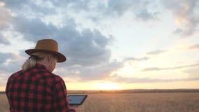 Kobieta rolnik jest na polu i monitoruje pszenicznej uprawy odosobniony tylni widok biel zwolnionego tempa wideo zbiory