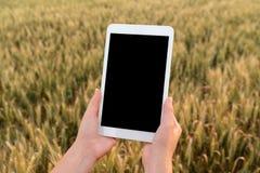Kobieta rolnik trzyma pastylkę z pustym ekranem fotografia royalty free