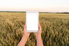 Kobieta rolnik trzyma pastylkę z pustym ekranem obrazy royalty free
