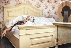 Kobieta sen w łóżka i beagle psie kłama pod koc z ona fotografia royalty free