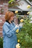 kobieta się różę ogrodowa Zdjęcie Royalty Free