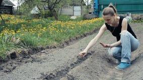Kobieta sia ziarna ogórek zdjęcie wideo