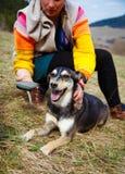 Kobieta szczotkuje jej psa w wiosen łąkach uśmiecha się Obrazy Royalty Free