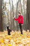 Kobieta trenuje czarnego psa w jesień parku Obrazy Royalty Free