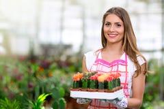Kobieta trzyma kaktusa w szklarni Zdjęcia Stock