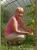 Kobieta trzyma ogórek zdjęcie stock