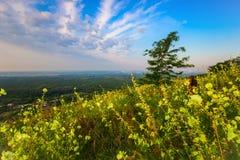 Kobieta turysta na wzgórze skłonie wśród kwiatów Fotografia Royalty Free