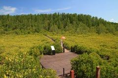 Kobieta turysty zieleni namorzynowego lasu ludzie są natury plenerowym słońcem Fotografia Royalty Free