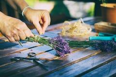 Kobieta tworzy bukiet naturalni lawendowi kwiaty Obraz Stock