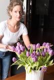 Kobieta tworzy bukiet purpurowi tulipany Zdjęcia Stock
