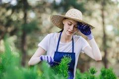 Kobieta używa ogrodnictwa narzędzie żyłować żywopłot, tnący krzaki z ogrodowymi strzyżeniami obrazy royalty free