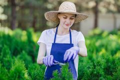 Kobieta używa ogrodnictwa narzędzie żyłować żywopłot, tnący krzaki z ogrodowymi strzyżeniami zdjęcia stock