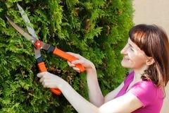 Kobieta używa ogrodnictwa narzędzie żyłować krzaki, sezonowi naszywani krzaki fotografia royalty free