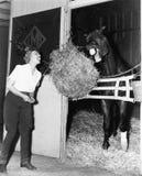 Kobieta udaje jeść siano belę z koniem (Wszystkie persons przedstawiający no są długiego utrzymania i żadny nieruchomość istnieje Zdjęcia Royalty Free