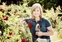 Kobieta uprawia ogródek czerwone róże i trzyma ogrodniczych narzędzia na słońcu fotografia royalty free