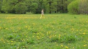 Kobieta w żółtym spodniowym odprowadzeniu wzdłuż dandelion pola zbiory