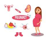kobieta w ciąży graficzny piękna dziewczyna Vektor Zdjęcia Stock