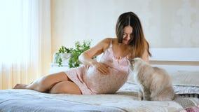 Kobieta w ciąży kłama na łóżku z kotem i pokazuje jej pozycję Dziewczyna muska jej round brzucha Zwierzę domowe blisko ciężarnego zbiory wideo