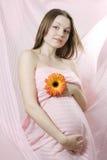 kobieta w ciąży różowi potomstwa Zdjęcie Royalty Free