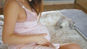 Kobieta w ciąży uśmiechy i muskają jej brzucha Kot kłama na łóżku i ziewa Zwierzę domowe relaksuje blisko swój kochanki zbiory