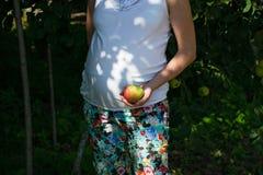 Kobieta w ciąży z świeżymi jabłkami Brzemienność, opieka zdrowotna, jedzenie i szczęścia pojęcie, zdrowa ciąża zdjęcia royalty free