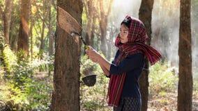 Kobieta w gumowej plantaci Zdjęcia Stock