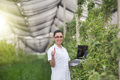 Kobieta w jabłczanym sadzie Obraz Royalty Free
