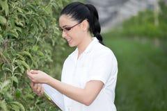 Kobieta w jabłczanym sadzie Fotografia Royalty Free