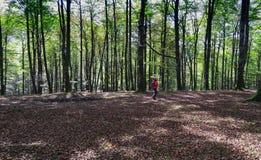 Kobieta w lasowym Zdrowym życiu obrazy stock