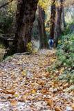 Kobieta w lesie Zdjęcie Stock