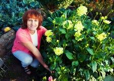 Kobieta w ogródzie dba dla kwiatów Zdjęcia Stock