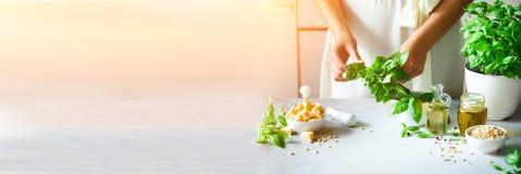 Kobieta w ogromnym smokingowym mienie garnku z świeżym organicznie basilem, biały kuchenny wewnętrzny projekt kosmos kopii lifest obraz stock