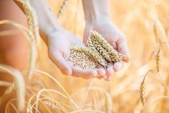 Kobieta w pszenicznym polu Zdjęcie Royalty Free