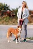 Kobieta w spacerze z jego Shetland sheepdog psem na smyczu Psia piechur pozycja, pozuje przed kamerą fotografia stock