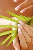 kobieta wręcza mienia liść palmy Fotografia Stock