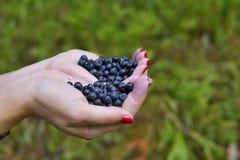 Kobieta wręcza mienia rozsypisko świeżych czarnych jagod above zielony tło Zdjęcia Stock