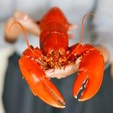 Kobieta wręcza mienie gotującego homara Obraz Stock